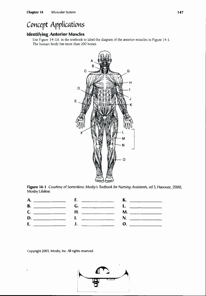 Printable Anatomy Labeling Worksheets Inspirational Funky Muscular System Diagram Labeled for Kids Pattern