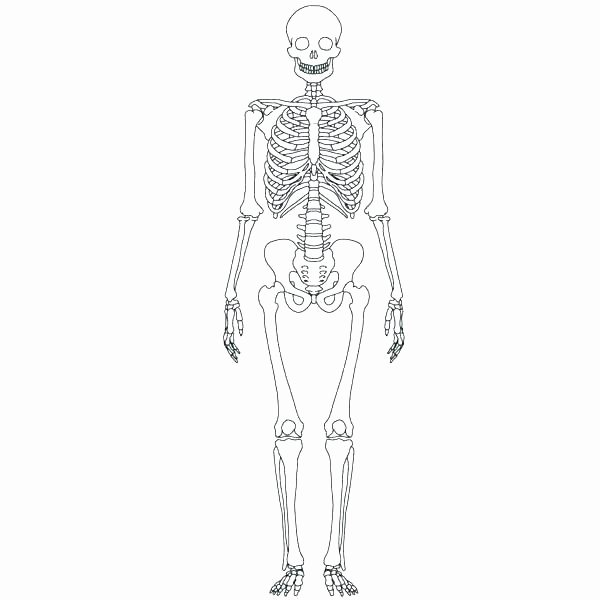 Printable Anatomy Labeling Worksheets Lovely Anatomy Worksheets