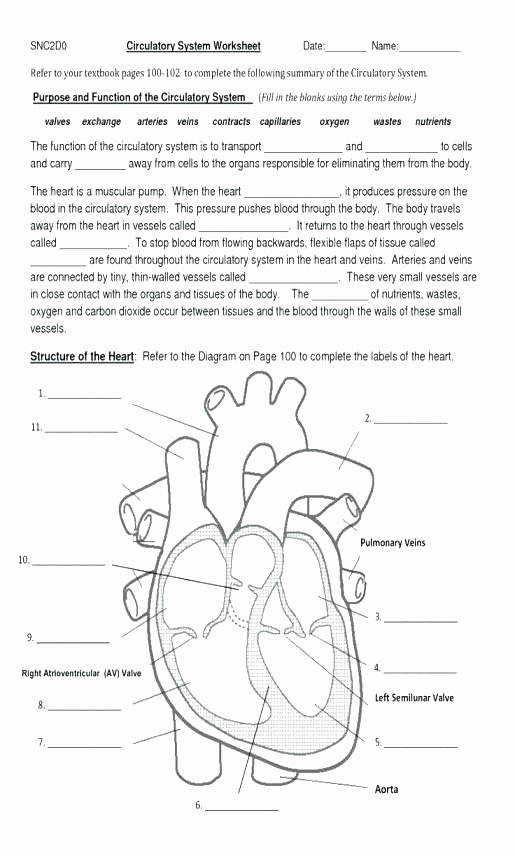 Printable Anatomy Worksheets Circulatory System Worksheet for Kids Worksheets All