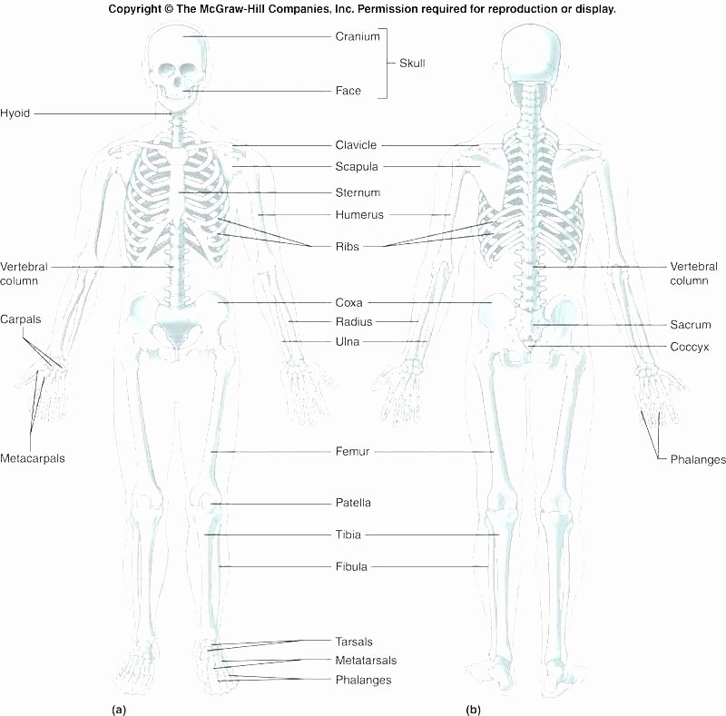 Printable Anatomy Worksheets Collection Human Regional Anatomy Coloring Pages