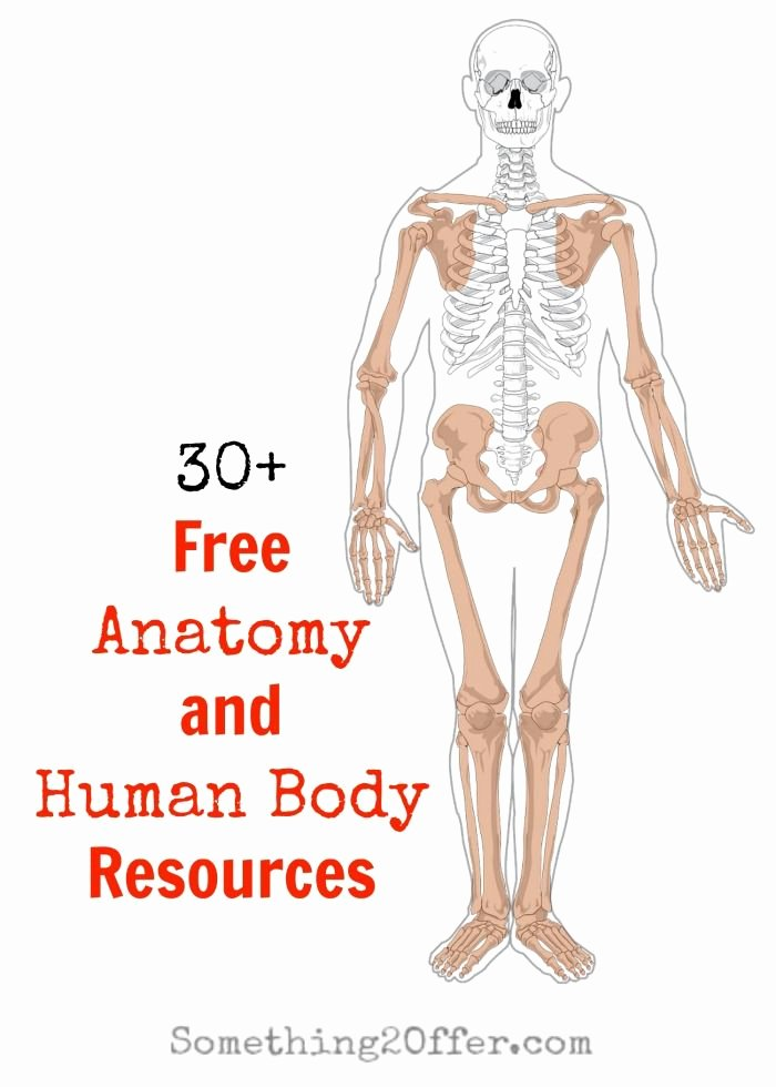 Printable Anatomy Worksheets Free Anatomy and Human Body Resources