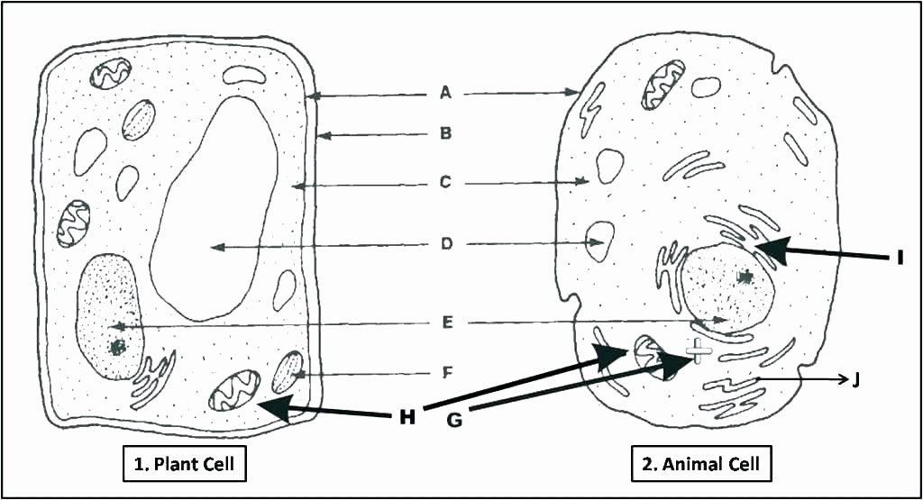 Printable Animal Cell Diagram Animal Cell Coloring Page with Labels – Lifewiththepeppers