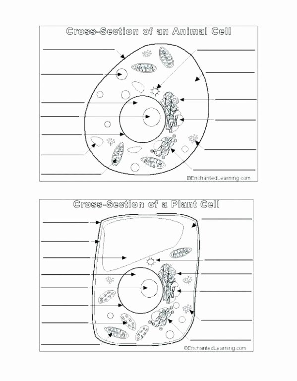 Printable Cell Worksheets Animal Cell Coloring Page Answers Great Biologycorner Plant