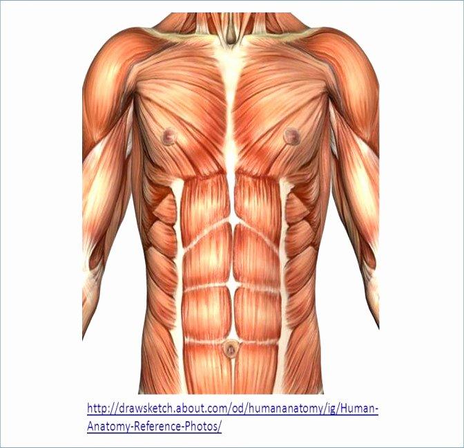 Printable Heart Diagram Diagram the Human Body Unique ¢Ë†Å¡ Human Heart Printable