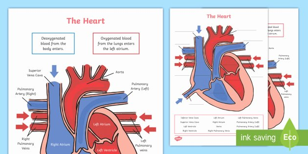Printable Heart Diagram Heart Diagram Labelling Activity