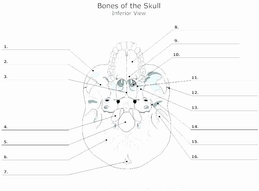 Printable Heart Diagram Skeleton Printable Worksheets Human Halloween Anatomy Body