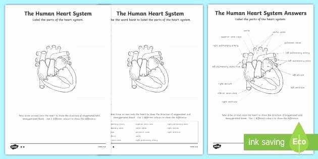 Printable Heart Diagram the Human Heart Human Heart Worksheets Human Heart Printable