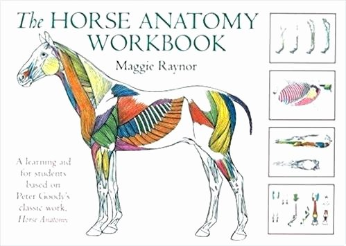 Printable Horse Anatomy Worksheets Veterinary Anatomy Coloring Pages
