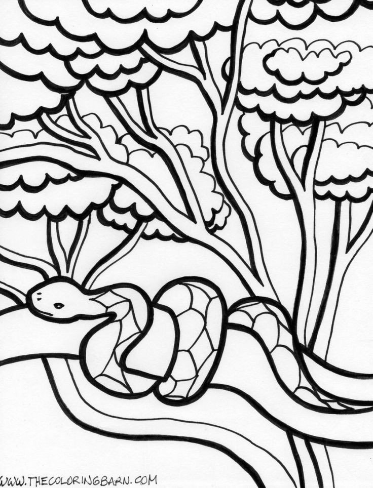 Rainforest Worksheets Free Free Printable Habitat Coloring Pages 21 Beautiful