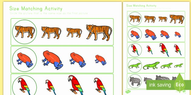 Rainforest Worksheets Free Jungle themed Size Matching Worksheet Worksheet Math