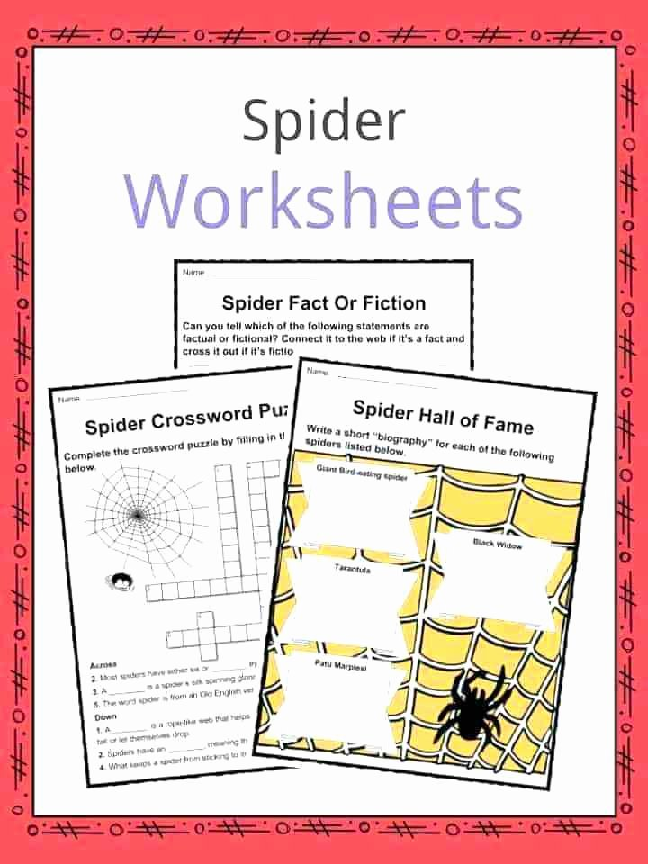 Rhythm Math Worksheet Spider Math Worksheets