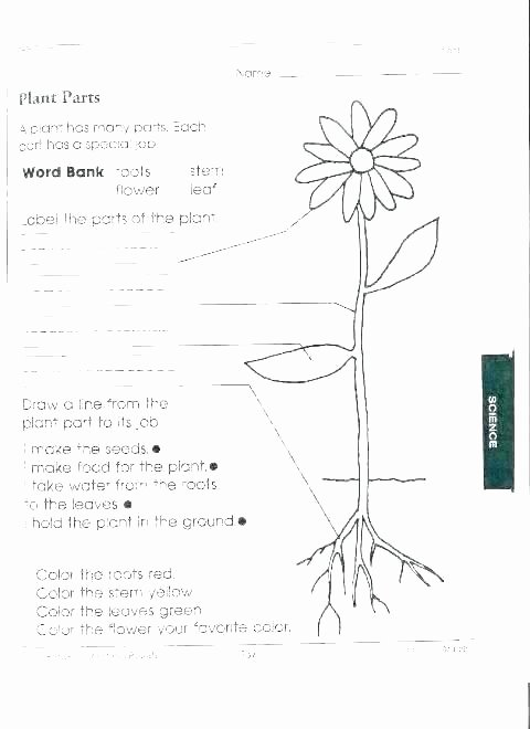Science Worksheet 1st Grade Seeds Plant Life Cycle Worksheets for Kids Lesson Plant