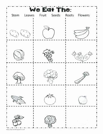 Science Worksheet First Grade Grade Science Worksheets Grade Science Worksheets Science