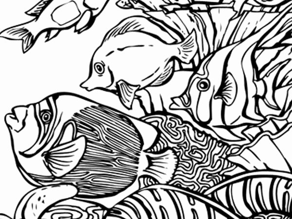 Sea Animal Worksheets Lovely Sea Creatures Coloring Pages – Dreade