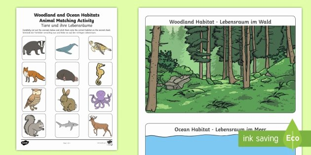 Sea Animal Worksheets Woodland and Ocean Habitats Animal sorting Worksheet Worksheet