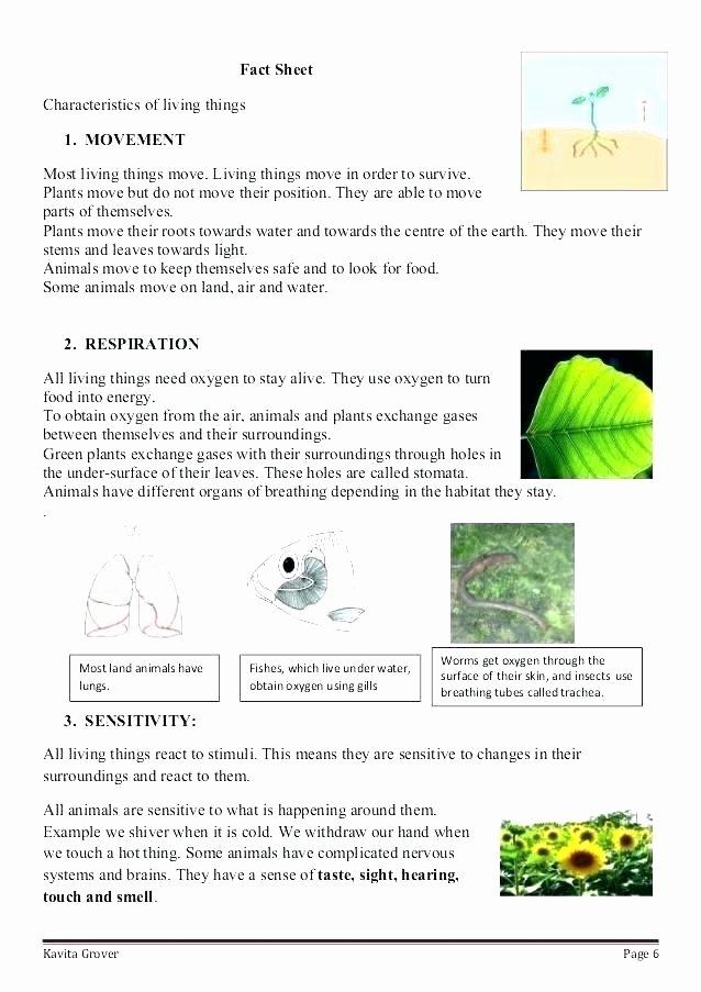 Sense Of Hearing Worksheet Lovely Animal Habitat Worksheets for Kindergarten Animals and their