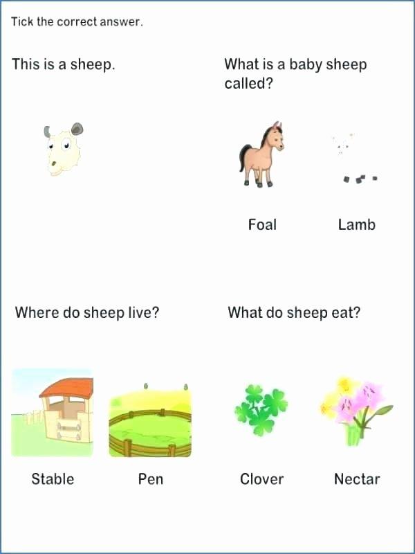 Sense Of Sight Worksheets Kindergarten Science Worksheets Printable