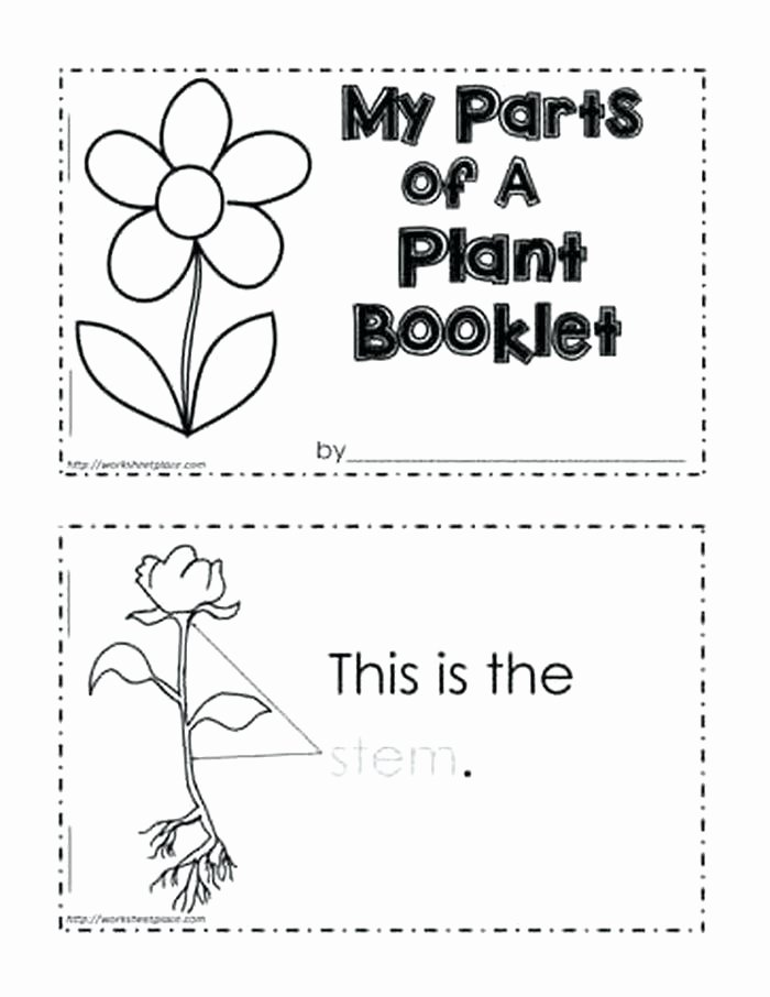 Sense Of Smell Worksheets Parts A Plant Worksheet Kindergarten Worksheets Science