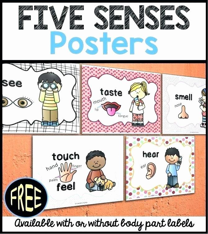 Sense Of Smell Worksheets Pre K Science Worksheets