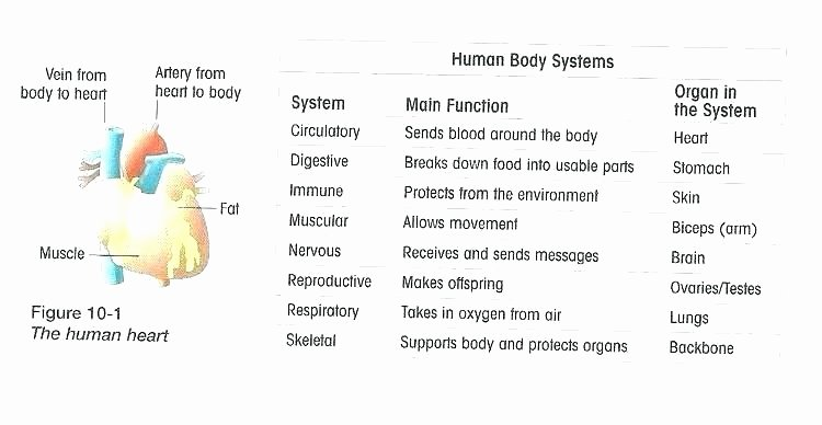 Sense organs Worksheets Body Systems and Functions Worksheets