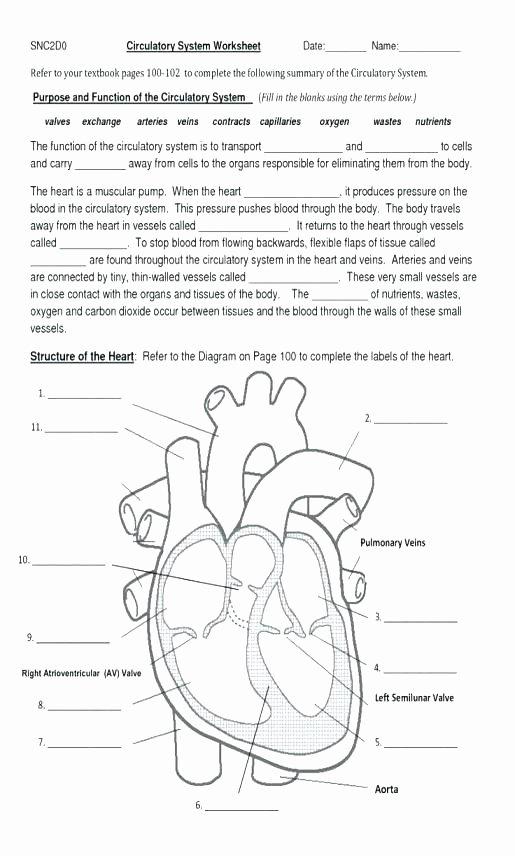Sense organs Worksheets Circulatory System Worksheet for Kids Worksheets All
