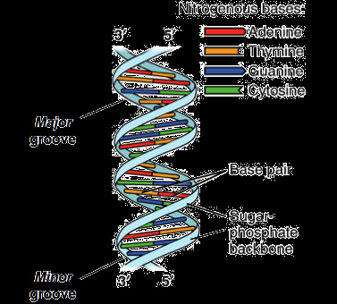 Skills Worksheet Dna Structure Dna Structure and Replication Review Article
