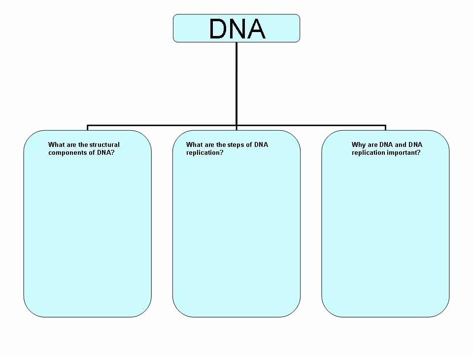 Skills Worksheet Dna Structure Replication Coloring Sheet Activity Worksheet Dna Worksheets