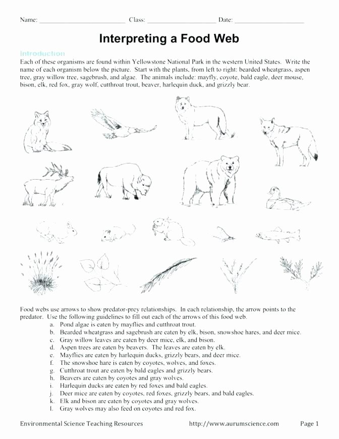 Teaching Genre Worksheets Food Chain Worksheets 3rd Grade – Petpage