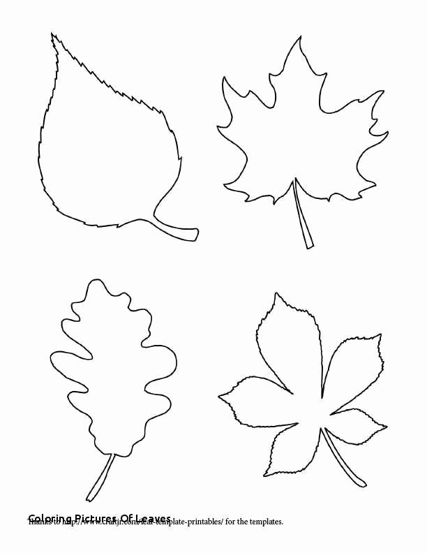 Thanksgiving Pattern Worksheets Unique 15 Thanksgiving Pages to Color for Free Blue History