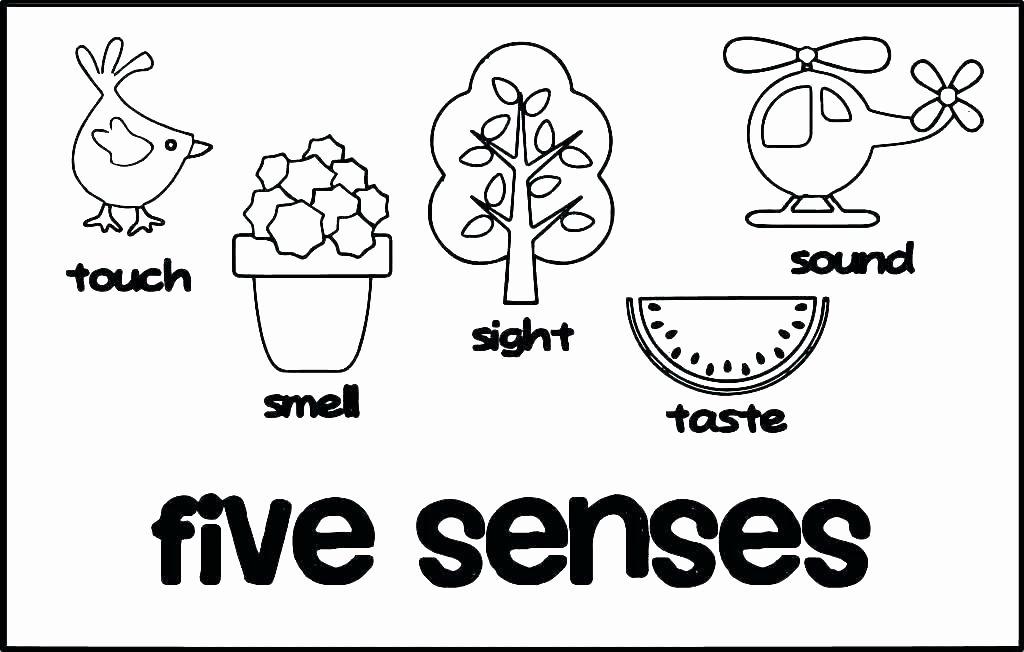 The Five Senses Worksheets Senses Coloring Pages – Konjure