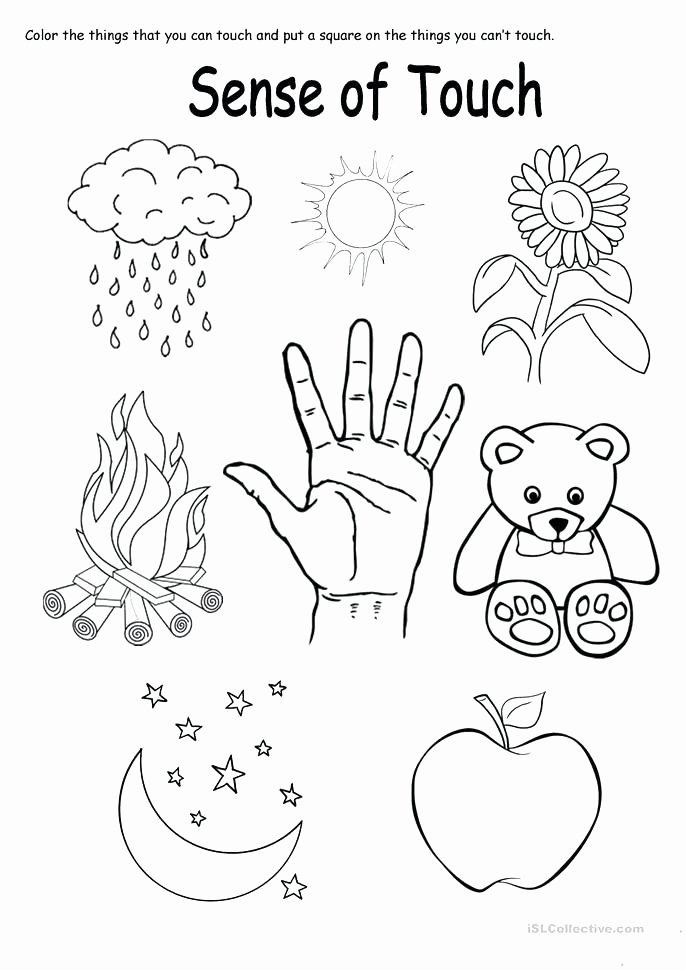 The Five Senses Worksheets the Five Senses Worksheets Sense touch Worksheet Kindergarten