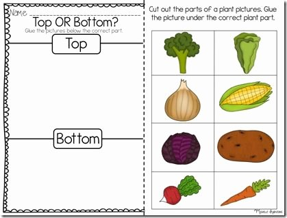 Vegetable Worksheets for Kindergarten sorting tops or Bottoms Science