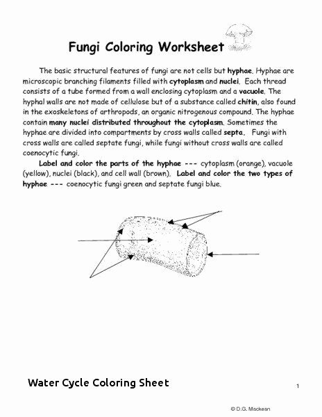Water Cycle Worksheet Kindergarten 15 Trending About Remodel for Water Cycle Coloring Sheet