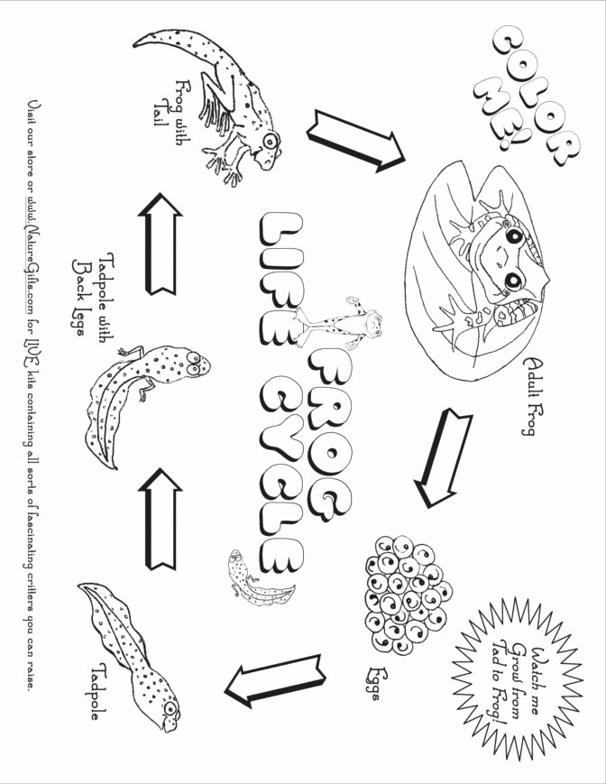 Water Cycle Worksheets 2nd Grade Worksheet Ideas 42 2nd Grade Printable Worksheets Image