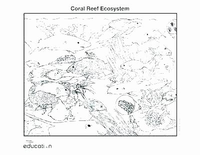 Worksheet Works Calculating Volume Coral Reef Worksheets for Kids Geology for Kids Worksheets